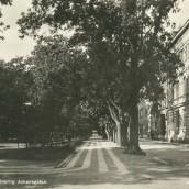 Hertig Johans gata (9)
