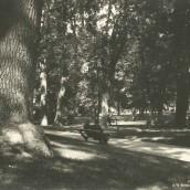 Kyrkparken (11)
