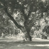 Kyrkparken (08)