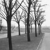 Vasaskolan [1959] (14)