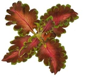 Ruffles copper
