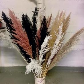 Pampasgräs 3-pack (finns i 4 färger)