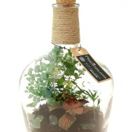 Planticum Slutet Ecosystem med bärgskristall och röd åderblad 30cm 1150 kr