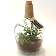 Planticum Slutet Ecosystem med bärgskristall och grön åderblad 30cm 1150 kr