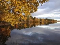 Bild ifrån Nydalasjön. Där finns fina cykel och vandringsleder. Copyright och fotograf Visitumea.