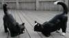 Katt Hukande - Katt hukand Kulör
