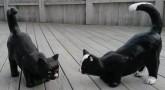 Katt Hukande
