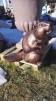 Bäver - Bäver kopparfärgad