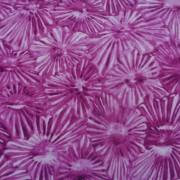 Bomullstyg cerise blommor (Glass House)