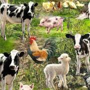 Bomullstyg Farm Life (Timeless Treasures)
