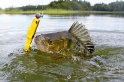 Hos oss kan du lösa fiskekort för fiske i Lagan och Hjörneredssjöarna
