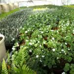 Sommarplantorna börjar ta form