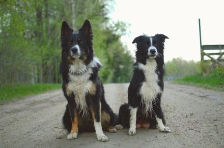Roo och Min