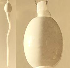 ANOVA White Sperm