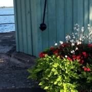 Blommor vid pumphuset