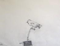 Fågel. Blyerts.
