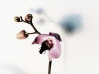 orkide_2
