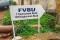 Sierra Leone, hjälpverksamhet, FVBU, förskola