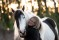 horse_mys me tjej_5231974 kopia