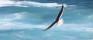 WEB_seagul_waves