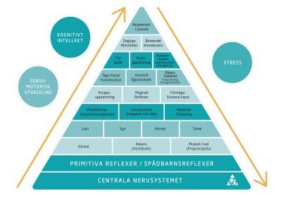 Moovup - vi jobbar med sensomotorik, motorik och integrering av reflexer för att enklare nå upp i pyramiden.
