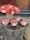 keramik svampar