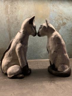 Siames katter -