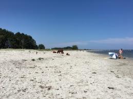 Sola och bada på Öland