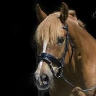 söt ponny