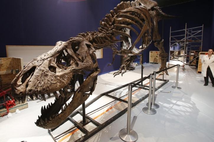 Michel Euler/AP/TT Ett annat exemplar av tyrannosaurus rex på Frankrikes naturhistoriska riksmuseum i Paris. Arkivbild.