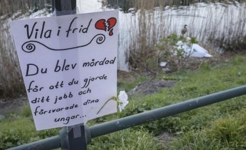 Johan Nilsson/TT En skjuten svan väckte starka känslor i april. Nu byter Malmö stad taktik när en ny svanfamilj flyttat in.