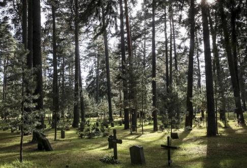 Helena Landstedt / TT Gravstenar och kors bland tallar på Skogskyrkogården i södra Stockholm. Arkivbild.