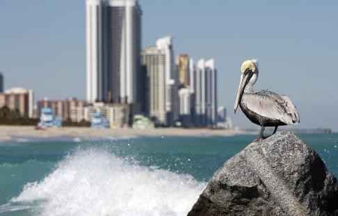 Alan Diaz/AP/TT Mannen låtsades vara en saudisk prins och levde lyxliv i Miami. Arkivbild.