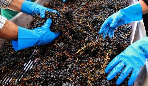 Bob Edme/AP/TT Vin- och fruktodlare i sydöstra Frankrike har lidit stora skador av en storm med hagen stora som pingisbollar. Arkivbild.