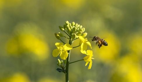 Johan Nilsson/TT Forskarna vill hellre se att företag lägger resurser på etablering av ängar än bikupor. Arkivbild.