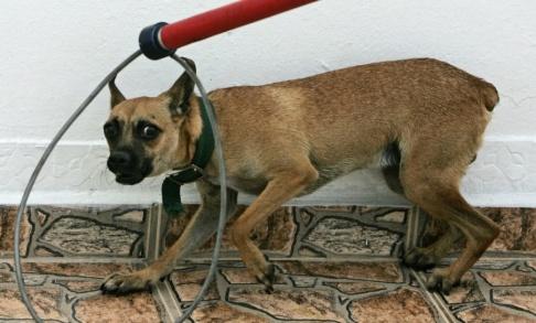 Brennan Linsley Veterinärer varnar för att adoptera gatuhundar. Arkivbild.