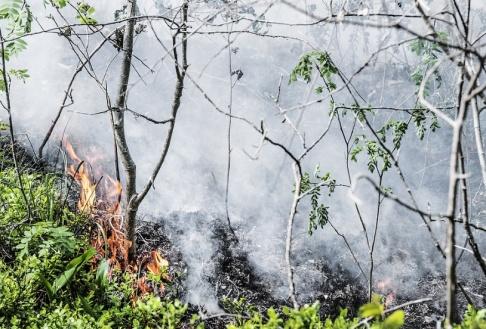 Tomas Oneborg/SvD/TT Risken för skogsbrand ökar. Arkivbild.