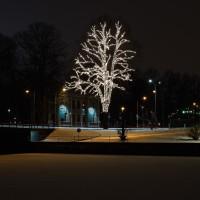 Lidköping Julträdet kväll vinter-