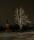 Lidköping Julträdet kyrkan kväll vinter-