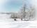 medelplana vinter rimfrost hästar