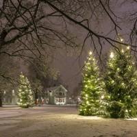 Jul i Stadsträdgården 2019-0111-02