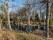 Landskap-Spegling i pöl vid Läcö1574