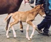 Glöð nyfödd