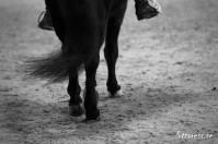 Kommunikation mellan häst och ryttare är otroligt intressant och viktigt i utbildning av ekipage/ Camilla