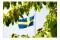 Körsbär_flagga