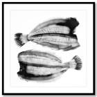 Fiskfond