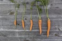 vegetables-1666632_1920