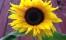 bilderwebb91-600x360