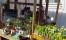 ing-britts växtdesign vårblommor