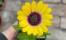 solros nils mårtensgård